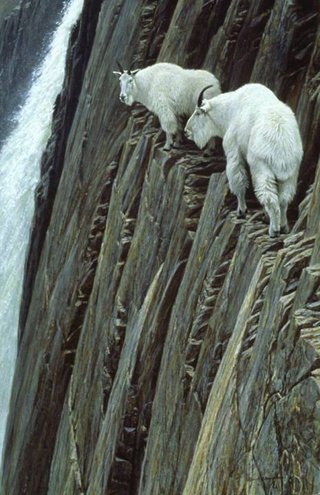 Crazy Goat on Cliff1